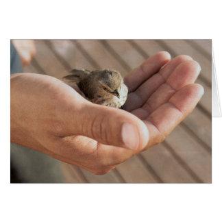 Ojo del pájaro del gorrión en la tarjeta de felici