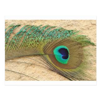 Ojo del pavo real postal