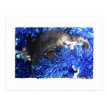 Ojo del perro en malla azul del navidad postal