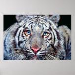 Ojo del poster del tigre
