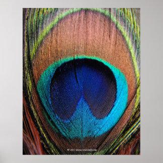 Ojo del primer de la pluma del pavo real impresiones