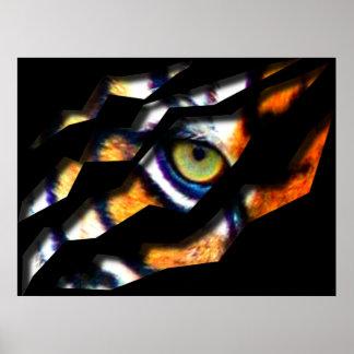 Ojo del rasgón del tigre a través posters