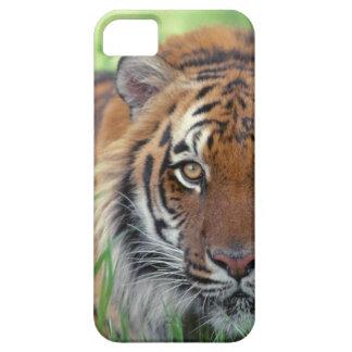 Ojo del tigre iPhone 5 funda