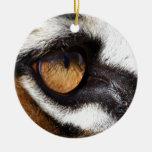 Ojo del tigre ornamente de reyes