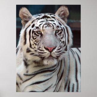 Ojo del tigre póster