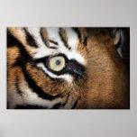 Ojo del tigre posters