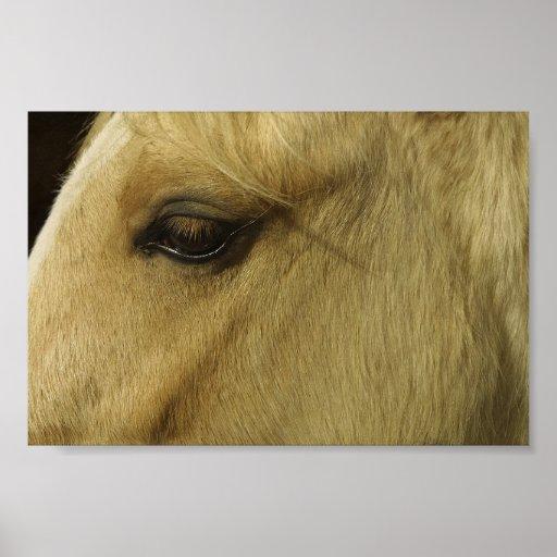 Ojo equino poster
