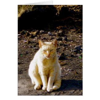 Ojo gruñón del hedor del gato tarjeta de felicitación