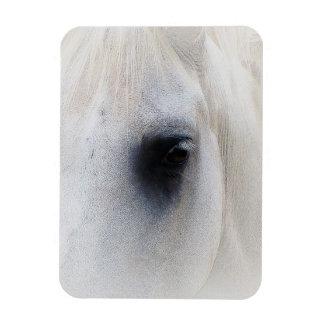 Ojo hermoso del caballo imán de vinilo