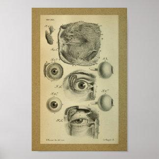 Ojo humano 1850 de la impresión de la anatomía del póster