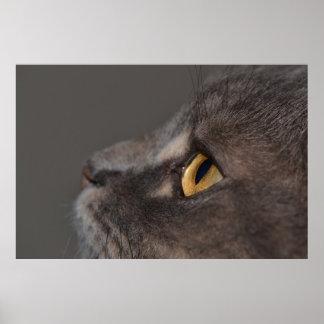 Ojo-Macro del gato Impresiones