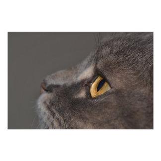 Ojo-Macro del gato Impresiones Fotográficas