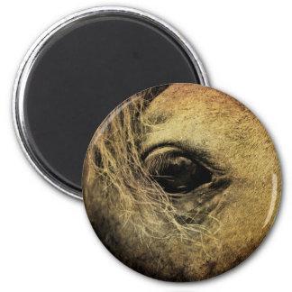 Ojo negro del caballo imanes para frigoríficos