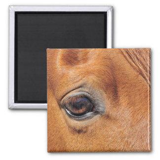 Ojo rojo del caballo iman de nevera