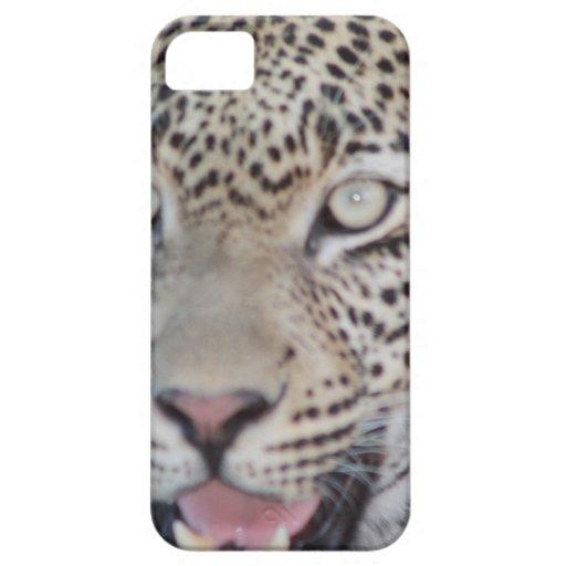 Ojos africanos salvajes del leopardo iPhone 5 protector