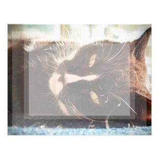 ojos animales del amarillo de la foto de la cara plantilla de membrete
