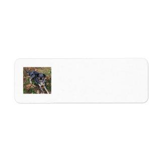 Ojos azules de cristal del perro del leopardo de C Etiqueta De Remite