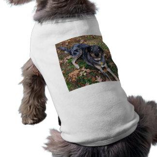 Ojos azules de cristal del perro del leopardo de C Camisa De Mascota