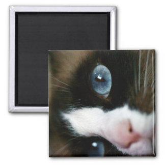 Ojos azules de la raqueta imán de nevera