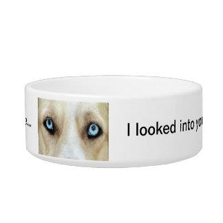Ojos azules del cuenco del alimento para animales tazón para gato