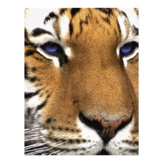 Ojos azules del estampado de animales del tigre de plantillas de membrete