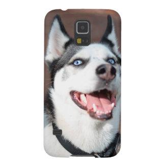 Ojos azules del perro del husky siberiano carcasas de galaxy s5