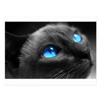 Ojos azules siameses postales