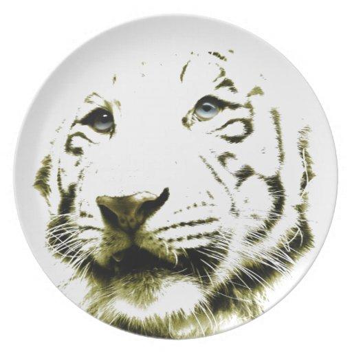 Ojos azules, tigre blanco plato de comida