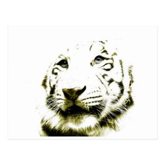 Ojos azules, tigre blanco postal