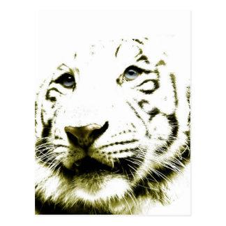 Ojos azules, tigre blanco tarjeta postal