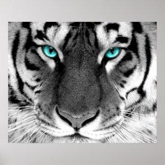 Ojos blancos del poster del tigre póster