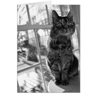 Ojos brillantes bw/Notecard del gatito bonito Tarjeta Pequeña