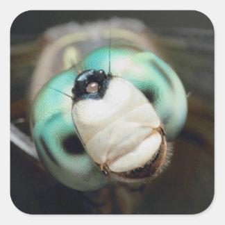 Ojos compuestos iridiscentes de la libélula linda pegatina cuadrada