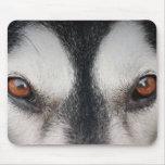 Ojos de Brown del perro del Malamute Tapetes De Raton