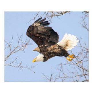 Ojos de Eagle calvo su premio Cojinete