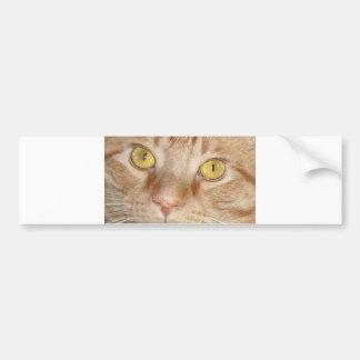 Ojos de gato anaranjados de Tabby Pegatina De Parachoque