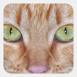Ojos de gato anaranjados pegatina cuadrada
