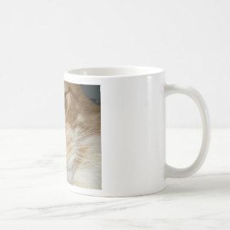 Ojos de gato anaranjados taza clásica