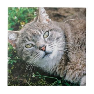 Ojos de gato azulejo ceramica