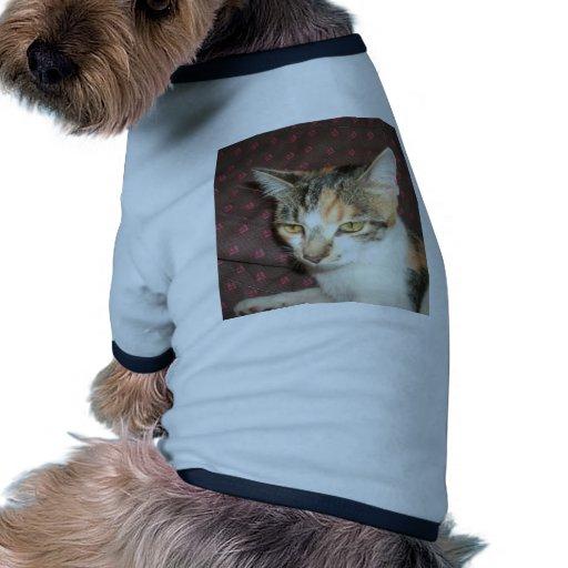 Ojos de gato camiseta de perro