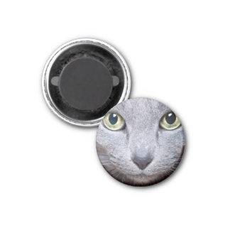 Ojos de gato imán redondo 3 cm