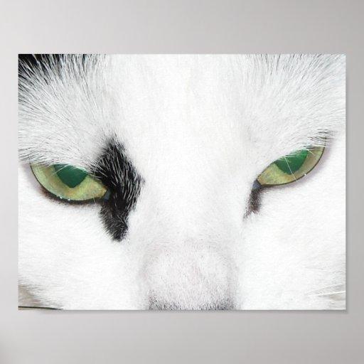 Ojos de gato póster