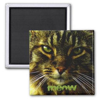 Ojos de gato que hipnotizan la foto imán cuadrado
