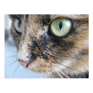 Ojos de gato tarjeta postal
