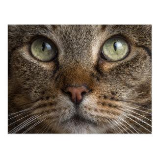 Ojos de gatos postales