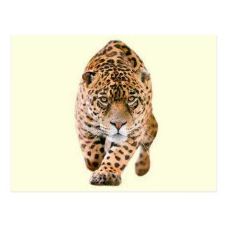 Ojos de Jaguar que caminan Tarjeta Postal