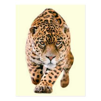 Ojos de Jaguar que caminan Tarjetas Postales