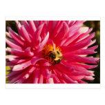 Ojos de la abeja postal