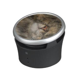 Ojos de la cubierta del gato de casa mientras que altavoz