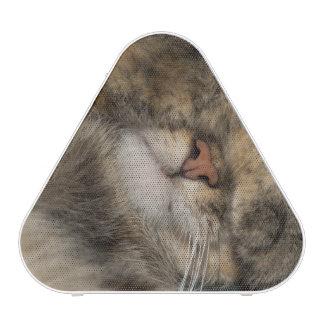 Ojos de la cubierta del gato de casa mientras que altavoz bluetooth